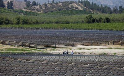 Tecnología solar fotovoltaica lidera capacidad instalada en el segmento PMGD